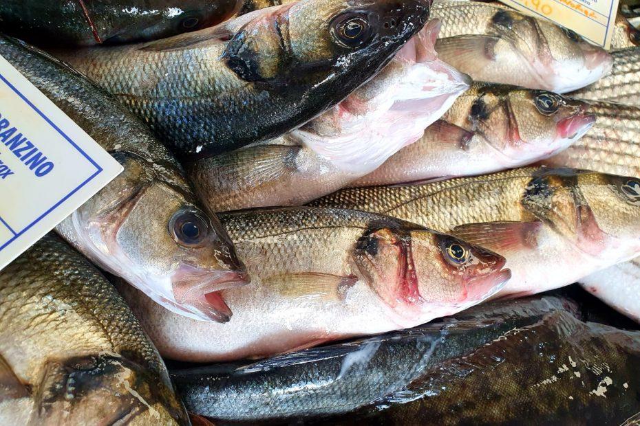 contattaci contatti pescheria tortolì