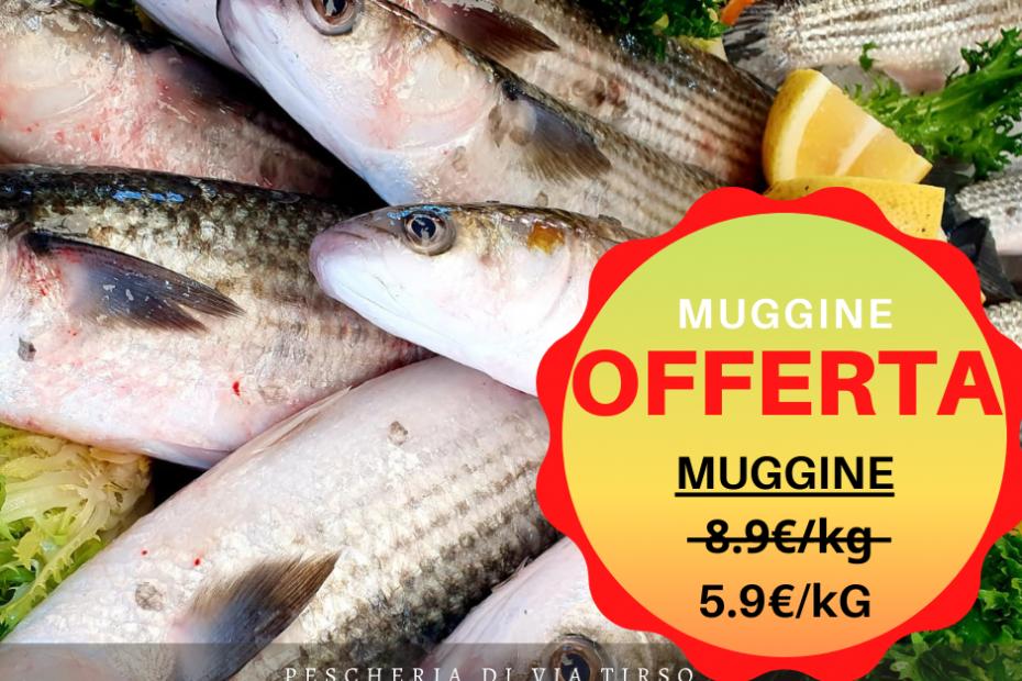 muggine in offerta a 5.9€